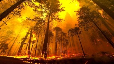 wte3-column-5-illustration-forest-fire