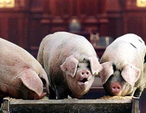 ocr-column-22-illustration-pigs-at-trough